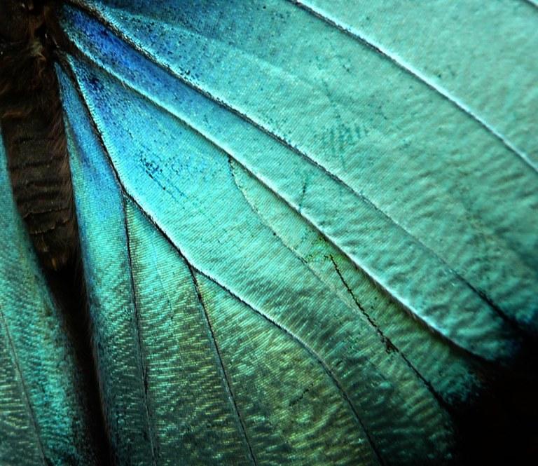 mindo-mariposa-15_retcomp